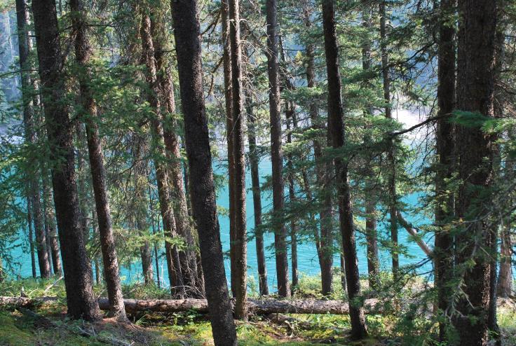 Banff ( Lac minnewanka) (15)